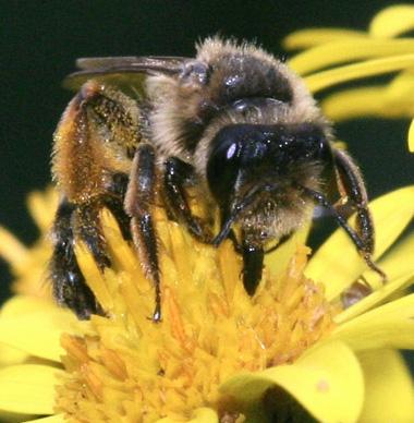 miel-abeja-por-que-produccion-composicion-nectar-honey