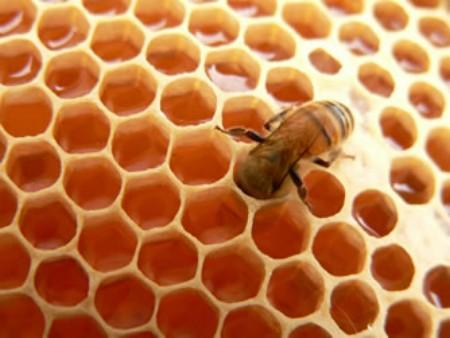 miel-abeja-por-que-produccion-composicion-nectar-panal