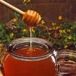 ¿Qué es la miel y por qué las abejas la fabrican?