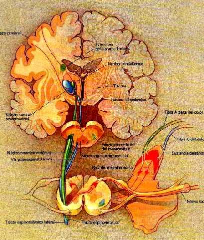 morfina-cerebro