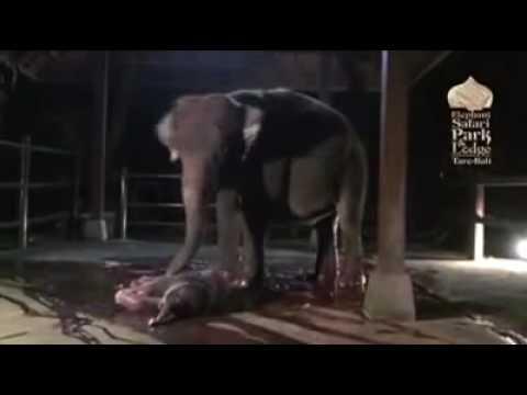 nacimiento elefante-nicky-riski