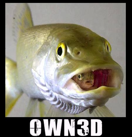 owned-peces comidos