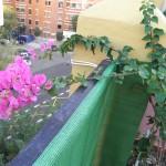 Las plantas de mi terraza