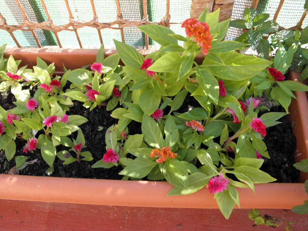 Las plantas de mi terraza blogodisea - Plantas terraza ...