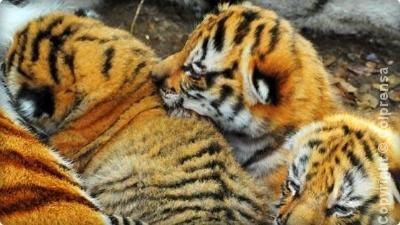 refugio villa lorena cachorros tigre