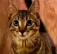 sparta gato youtube