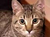 sparta-mean-kitty videos