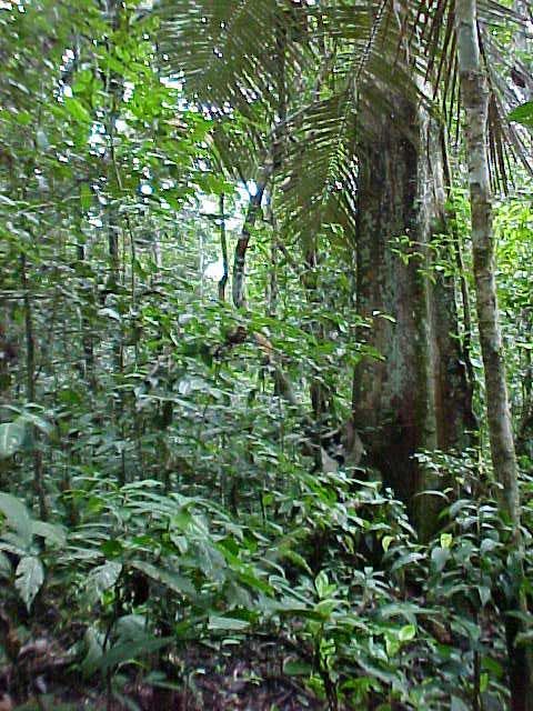 ancient_forest_old_growth_forest_bosques_nativos