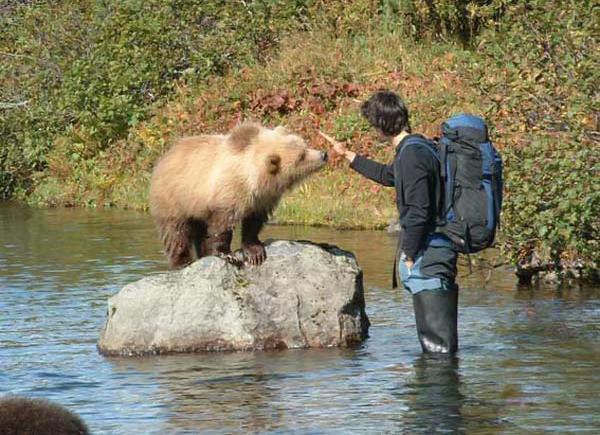 animales-bonitos-osezno oso
