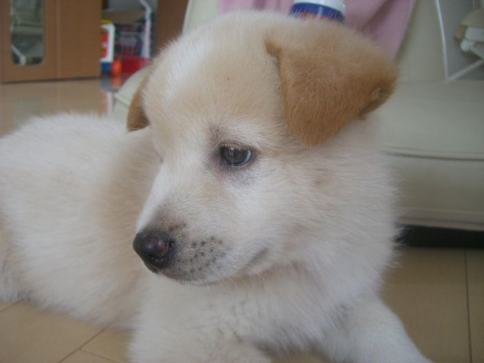 animales-bonitos-perrito