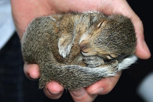 animales-graciosos-curiosos-ardilla-durmiendo