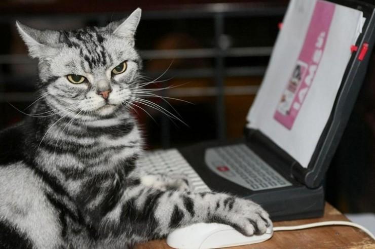 animales-graciosos-curiosos-gato-ordenador