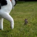animales-graciosos-curiosos-gato-raton