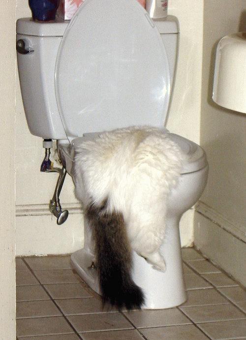 animales-graciosos-curiosos-gato-vater