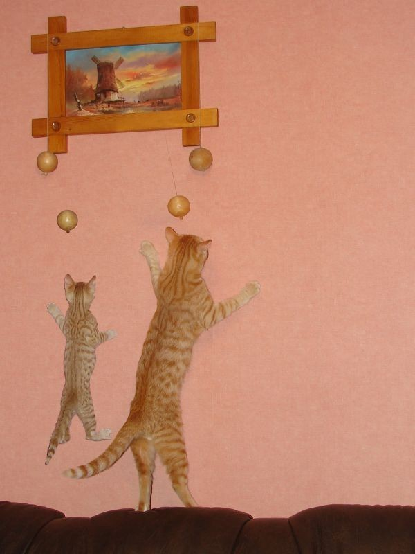 animales-graciosos-curiosos-gatos-jugando