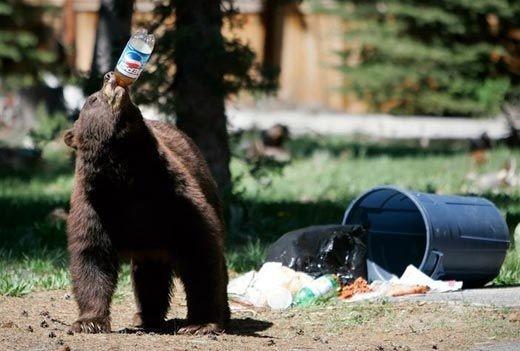 animales-graciosos-curiosos-oso-pepsi