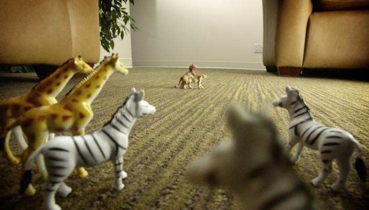 animales-graciosos-curiosos-voyeur