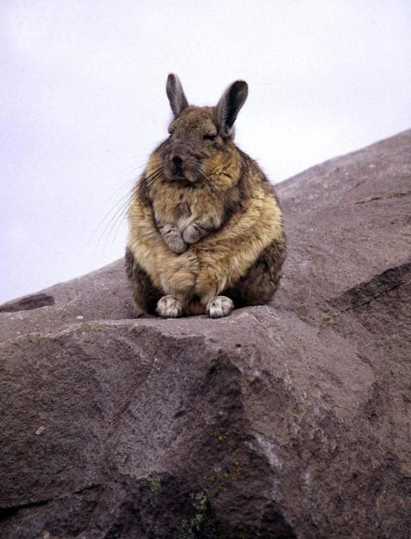animales-graciosos-imagenes-images-pic-pics-conejo