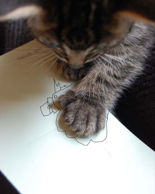 animales-graciosos-imagenes-images-pic-pics-gato-estampa-firma