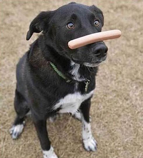 animales-graciosos-imagenes-images-pic-pics-perro-salchicha