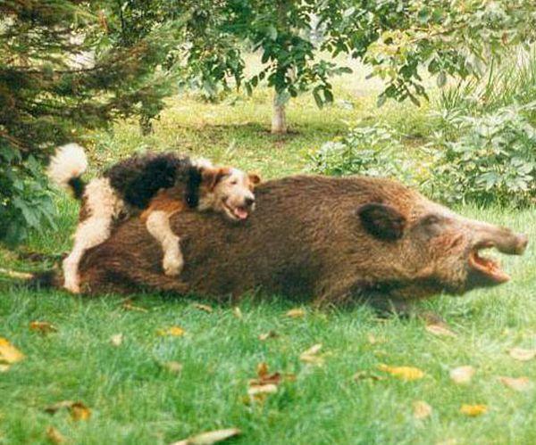 animales imagenes humor 015