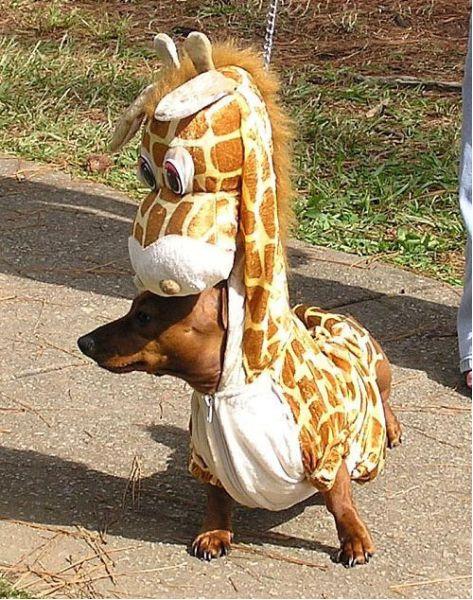 animales imagenes humor 016