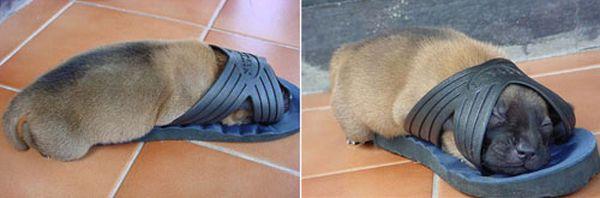 animales imagenes humor 019