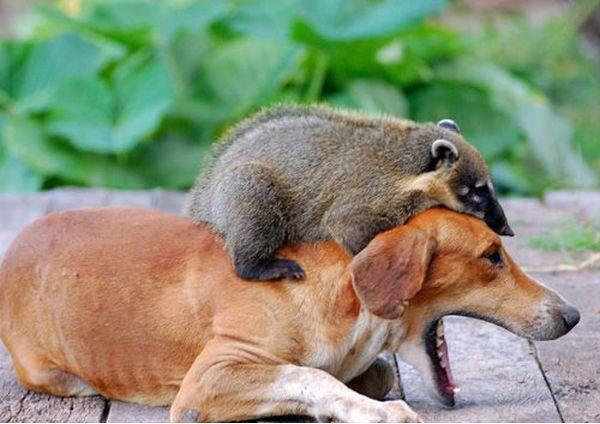 animales imagenes humor 032