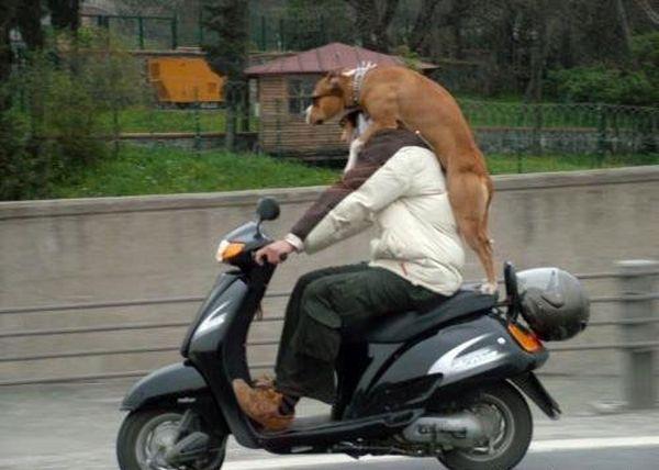 animales imagenes humor 043