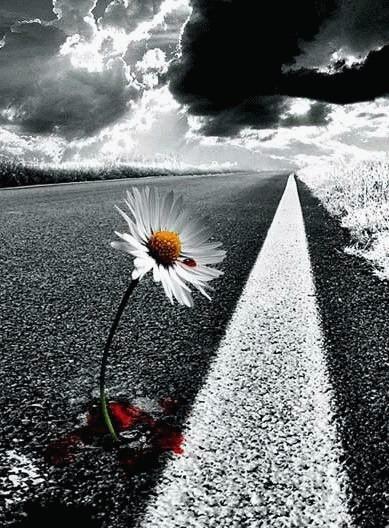 arte-imagenes-flor-carretera
