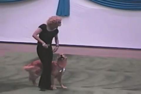 coreografia perro grease