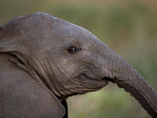elefante cria 8 meses