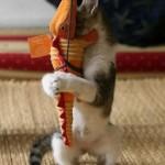 Animales graciosos: Gato juguetón