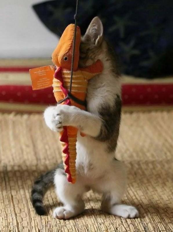 gato-jugueton-abrazando