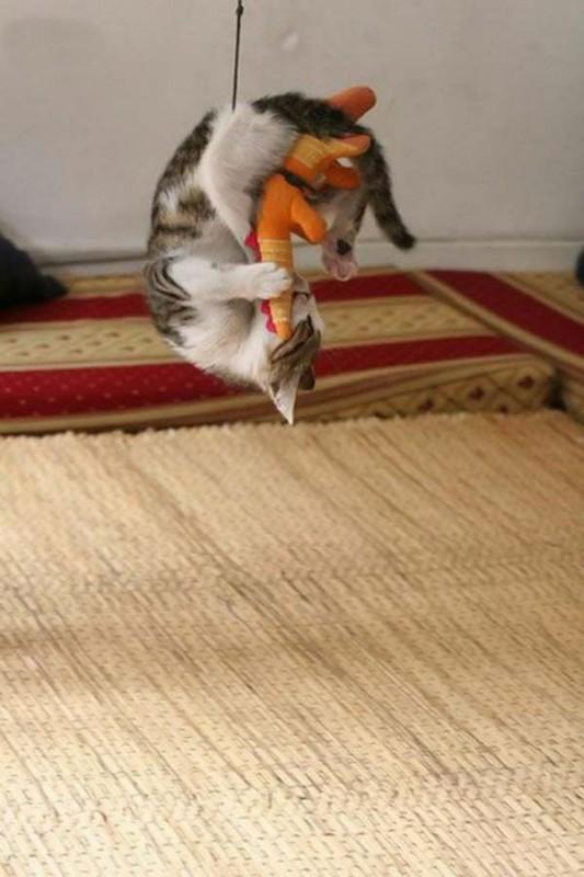 gato-jugueton-colgado