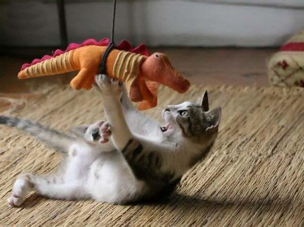 gato-jugueton-gatito
