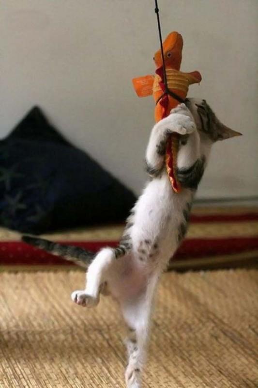 gato-jugueton-jugando