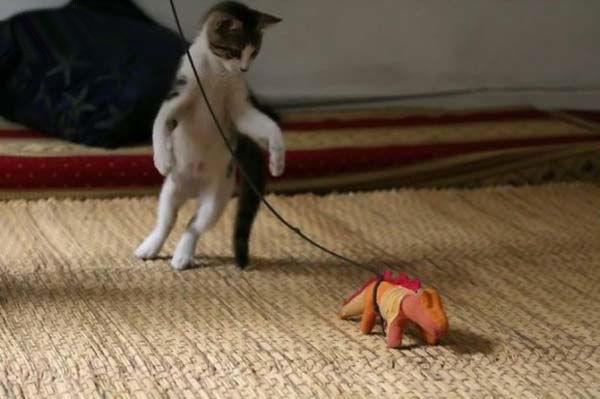gato-jugueton-saltando