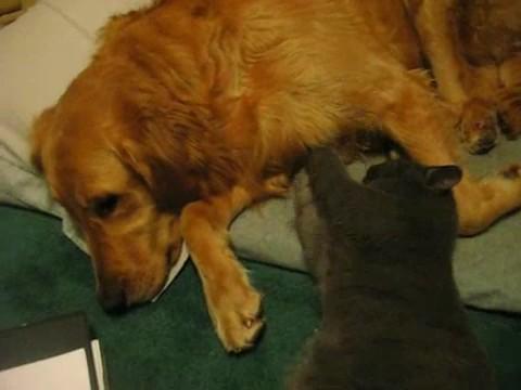 gato masaje perro
