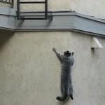 El gato que trepa para subir a casa