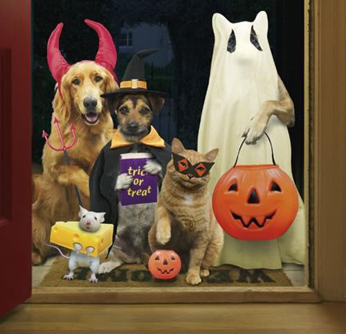 halloween humor animales trick treat