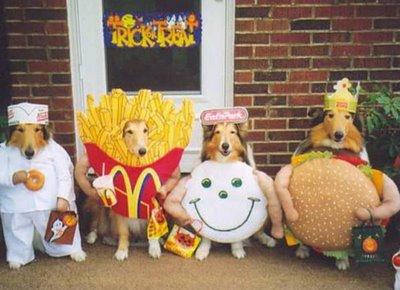 halloween humor perros disfraces