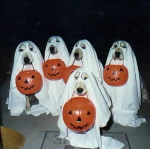 halloween humor perros fantasma