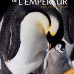 marcha-pinguinos-viaje-emperador-41