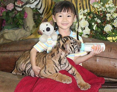 nina biberon tigre