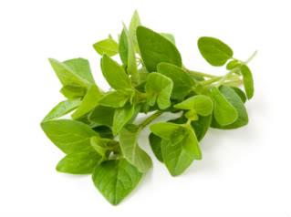 oregano hierba aromatica