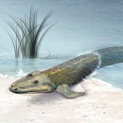 sangre-salada-evolucion-mar-seres-vivos-tierra-pez-anfibio-mamifero
