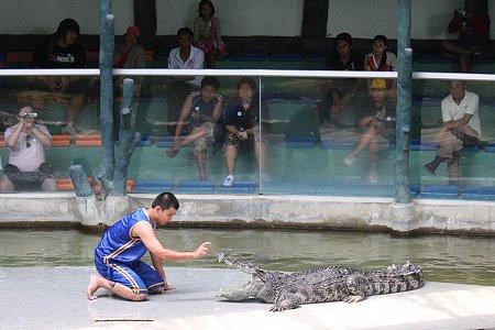 zoo tigres Sriracha cocodrilos espectaculo
