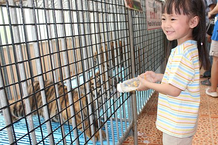 zoo tigres Sriracha dando biberon