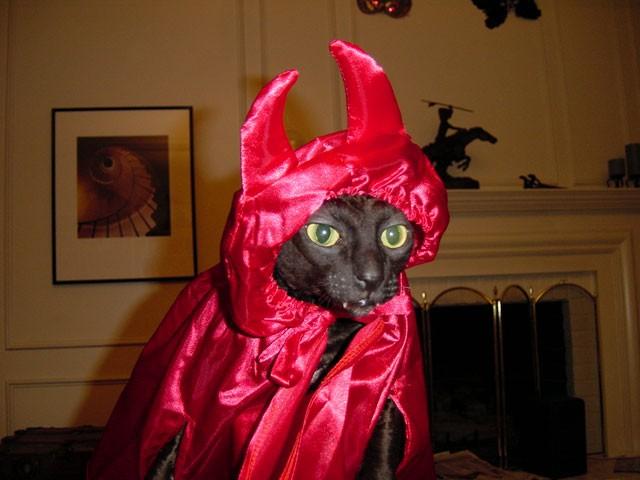 animales-graciosos-gato-demonio